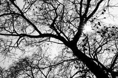 Ramas y hojas de árbol de la silueta Foto de archivo