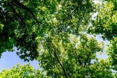 Ramas y hojas de árbol en el cielo azul Imágenes de archivo libres de regalías