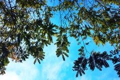 Ramas y hojas de árboles y del cielo azul fotos de archivo libres de regalías