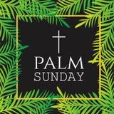 Ramas y hojas de la palma Marco cuadrado ilustración del vector