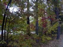 Ramas y hojas de las ramitas de los árboles de la caída Imagenes de archivo