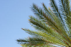 Ramas y hojas de palmera de Raiant Imagen de archivo