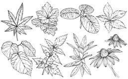 Ramas y hojas determinadas, elementos exhaustos del dise?o de la mano para las tarjetas de felicitaci?n para la boda libre illustration