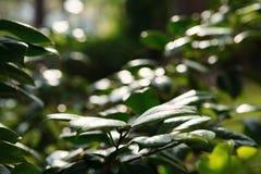 Ramas y hojas verdes en naturaleza fotos de archivo libres de regalías