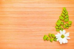 ramas y manzanilla en fondo de madera imágenes de archivo libres de regalías