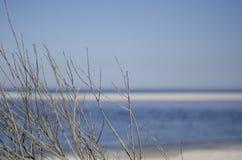 Ramas y mar Imagen de archivo libre de regalías