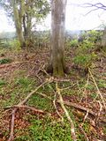 Ramas y nr de los árboles Crookham Northumerland, Inglaterra Reino Unido Fotos de archivo