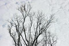 Ramas y nubes Foto de archivo libre de regalías