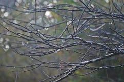 Ramas y sin las hojas Foto de archivo libre de regalías