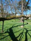 Ramas y sombras del roble Fotografía de archivo