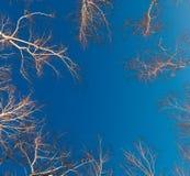 Ramas y troncos de los árboles de abedul en el fondo del cloudl Foto de archivo