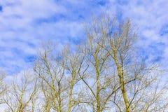 Ramas y troncos desnudos del árbol en el fondo del cielo Imágenes de archivo libres de regalías