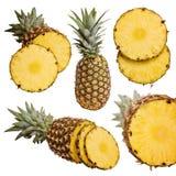 Ramassage d'ananas Image stock