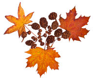 Ramassage d'automne Photo libre de droits