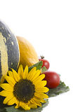 Ramassage d'automne Photographie stock
