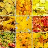 Ramassage d'automne Photographie stock libre de droits