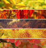 Ramassage d'automne Image stock