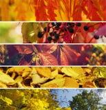Ramassage d'automne Photos libres de droits