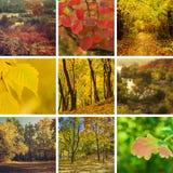 Ramassage d'automne Photo stock