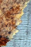 Ramassage d'automne Ramassage d'automne feuilles Jaune-brunes de bouleau sur une surface en bois Photographie stock libre de droits