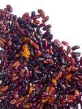 Ramassage d'haricots rouges Photographie stock libre de droits