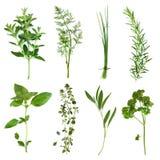Ramassage d'herbes Images stock