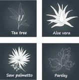 Ramassage d'herbes illustration de vecteur