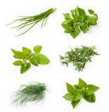 Ramassage d'herbes fraîches Images libres de droits