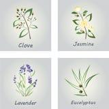 Ramassage d'herbes Labels pour les huiles essentielles illustration de vecteur