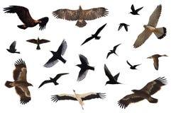 Ramassage d'oiseau Photos libres de droits