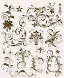 Ramassage d'ornements floraux Image stock