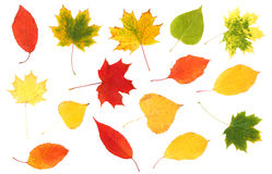 Ramassage de belles lames d'automne colorées Photos stock