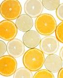 Ramassage de citron photographie stock