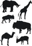 Ramassage de faune de la savane Image libre de droits