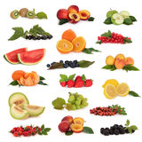 Ramassage de fruit Images stock