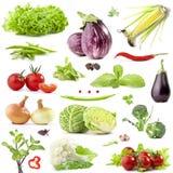 Ramassage de légumes Images libres de droits