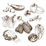 Ramassage de légumes Images stock
