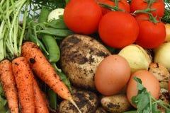 Ramassage de légumes et d'oeufs organiques Photos stock