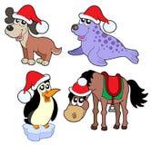 ramassage de Noël d'animaux Photographie stock