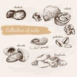 Ramassage de noix illustration de vecteur