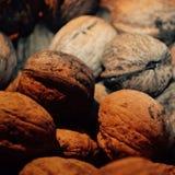 Ramassage de noix Image libre de droits