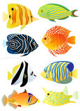 Ramassage de poissons tropicaux Photographie stock libre de droits