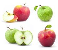 Ramassage de pommes rouges et vertes Images libres de droits