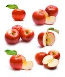Ramassage de pommes rouges mûres Photos stock