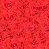 Ramassage de roses rouges Photographie stock libre de droits