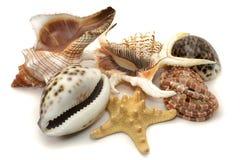 Ramassage de Sea-shell Image libre de droits