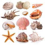 Ramassage de Seashell Photographie stock