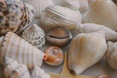 Ramassage de Seashell La vue haute étroite de beaucoup de coquillages a empilé ensemble comme texture et fond photographie stock
