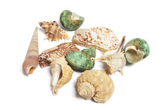Ramassage de Seashells images libres de droits
