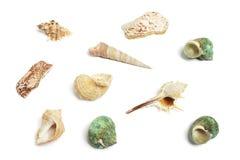 Ramassage de Seashells photos stock